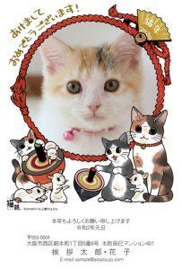猫の写真入り年賀状