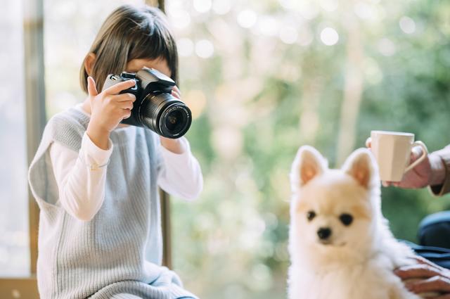 犬を撮影する