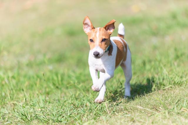 写真撮影 走る犬